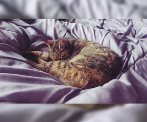 bed, cat, and cocooning image