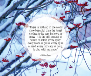 christmas, december, and quote image