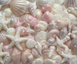 pink, shell, and pastel image
