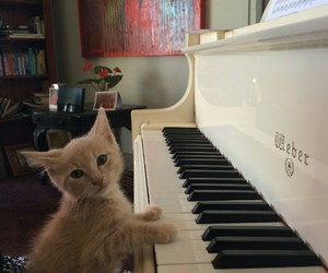 cat, piano, and animal image