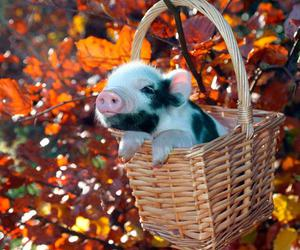 pig, autumn, and cute image