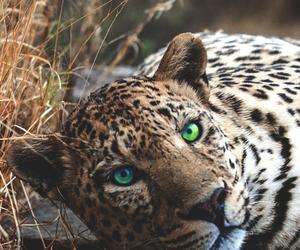 animal, beautiful, and eyes image