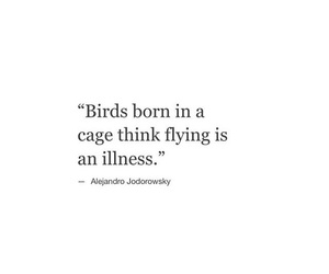 be strong, birds, and black and white image