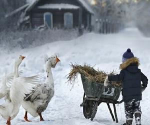 snow, winter, and animals image