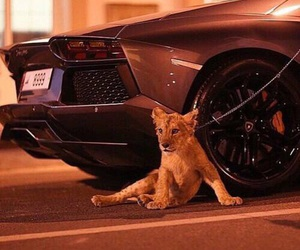 lion and luxury image