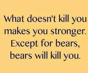 bear, strong, and funny image