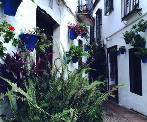 Cadiz, flowers, and spain image