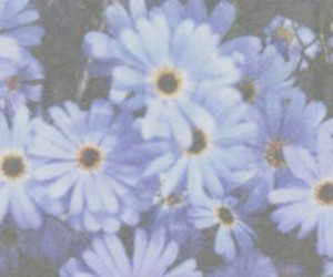 flowers, grunge, and blue image