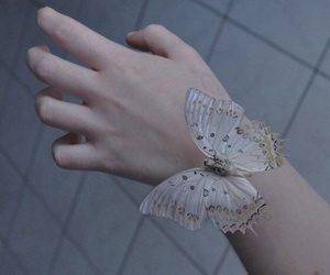 butterfly, hand, and pale image