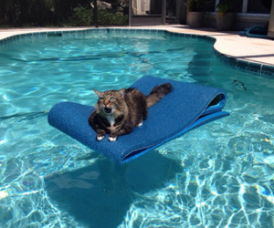 pool and cat image
