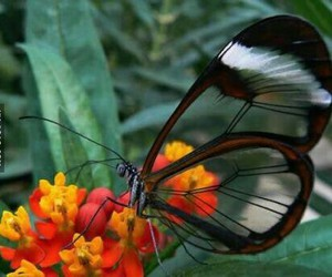 beautiful, flower, and butterfly image
