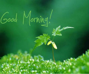 good morning quotes, good morning sms, and good morning wishes image