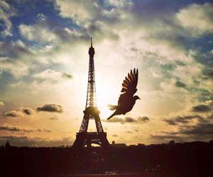 paris, peace, and prayforparis image
