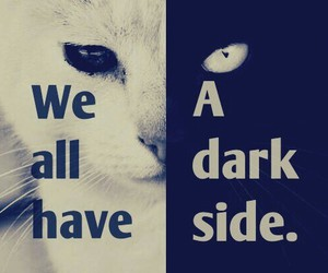 cat, dark, and white image
