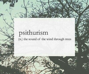 tree, wind, and definition image