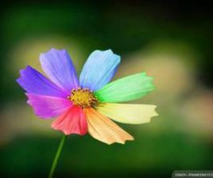 colourful, flowers, and rainbow image