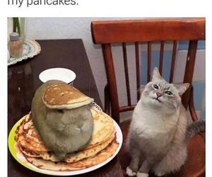 funny, cat, and pancakes image