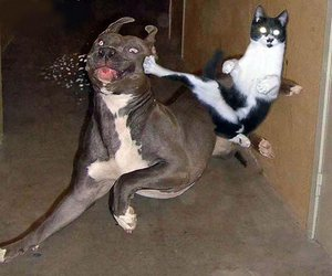 cat, dog, and funny image