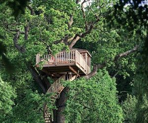 tree, house, and tree house image