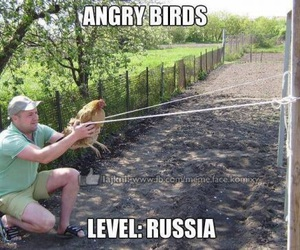 funny, angry birds, and bird image