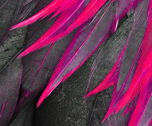 pink and feathers image