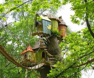 house, tree, and tree house image