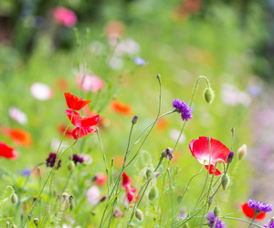 August, meadow, and west sussex image