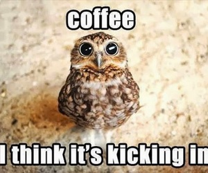 coffee, owl, and funny image