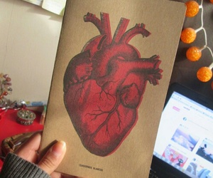 heart, corazon, and red image