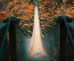 bridge, autumn, and fall image