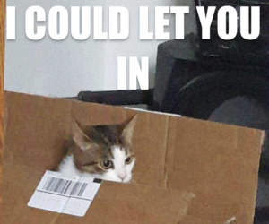 cat, cats, and funny image