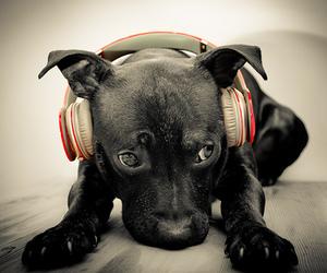 dog, music, and black image