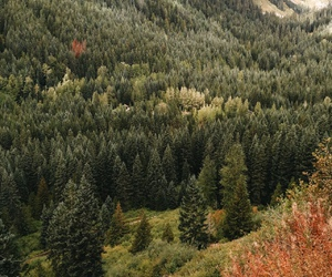 nature, forest, and fall image