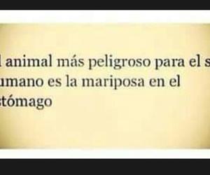 amor, animal, and desamor image