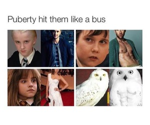 harry potter and puberty image