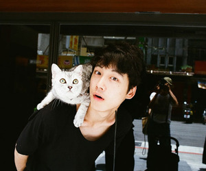 cat, japanese, and model image
