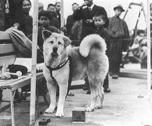 hachiko and dog image