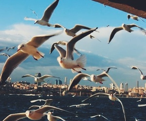 istanbul, sea, and travel image