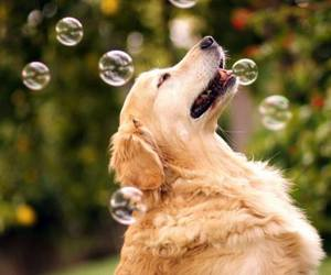 dog and bubbles image
