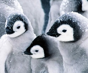 animal, penguin, and snow image