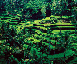 bali, green, and travel image