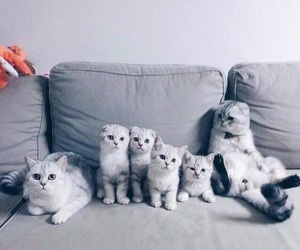 cat, grey, and cute image