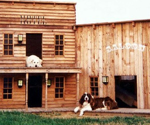 cool, dog, and house image