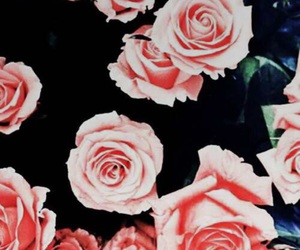 iphone, pink, and pink roses image