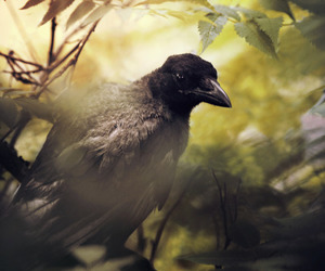 animals, crow, and forest image