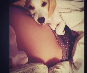baby, pregnant, and dachshound image