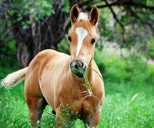 horse and foals image