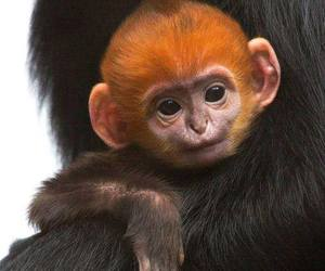 monkey, animal, and cute image
