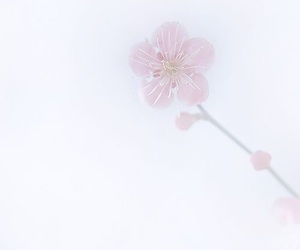 faded, spring, and flowers image