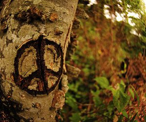 peace, tree, and nature image